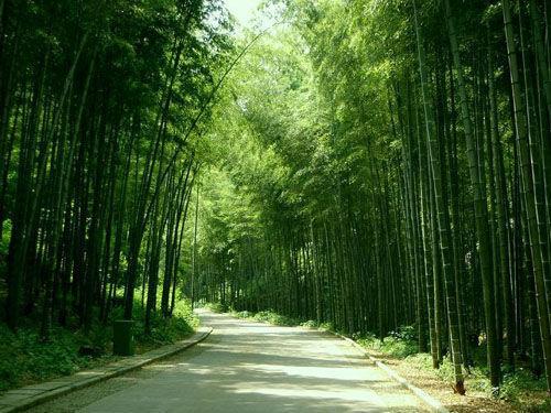 宜兴竹海风景区,是国家风景名胜区
