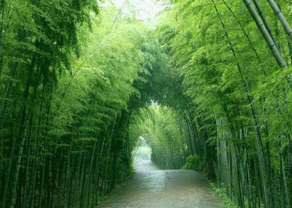 宜兴竹海风景区横跨江苏